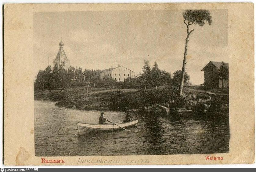 Валаам .Сосна зонтичная.1900—1917 Никольский Скит