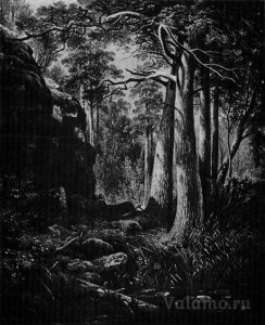 Шишкин.Сосновый лес и гранитные скалы(1860).Литография - Агапов. Художники на Валааме(1983). Скан И. Сазеева.jpg