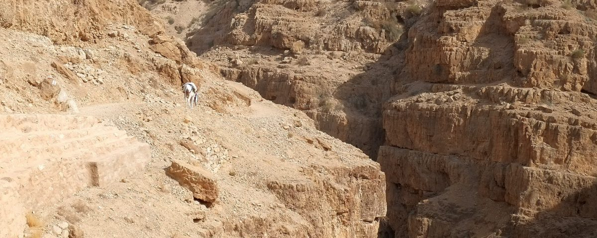 Ослик идёт древней тропой вдоль ущёлья Вади Кельт
